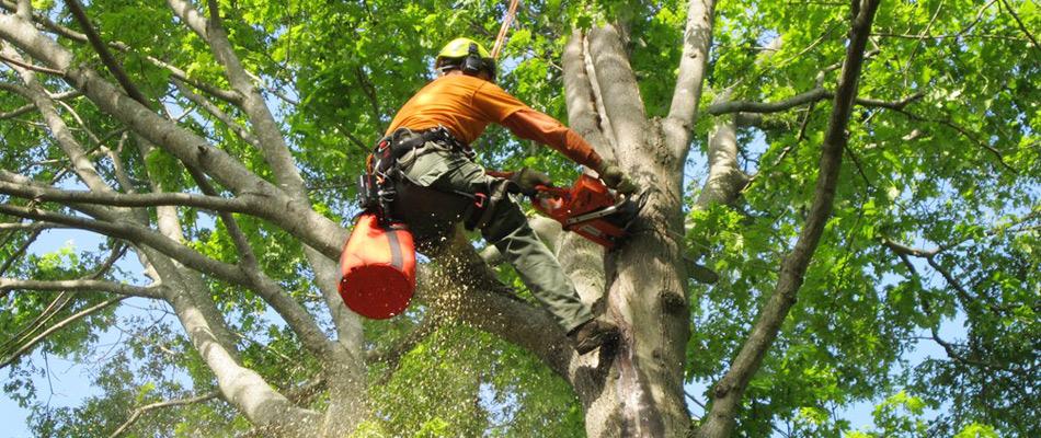 Abita Tree Service - Louisiana Tree Removal